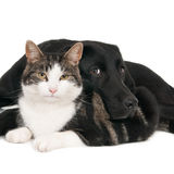 Cat and dog, unlikely companions Stock Images
