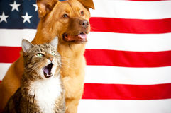 Cat and dog with US flag Stock Images