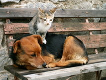 Cat and dog and valentine day. Cat and dog and their valentine day Royalty Free Stock Photos