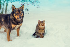 Cat and dog walking together Stock Photography