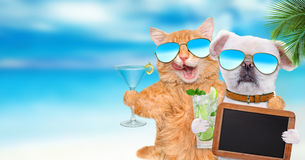 Cat and dog wearing sunglasses relaxing in the sea background. Royalty Free Stock Images