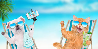 Cat and dog wearing sunglasses relaxing sitting on deckchair . Royalty Free Stock Photo