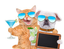Cat and dog wearing sunglasses relaxing in the white background. Stock Image