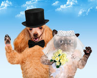 Cat and Dog. Wedding Royalty Free Stock Images