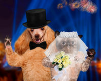 Cat and Dog. Wedding Stock Photography