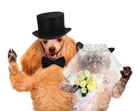 Cat and Dog. Wedding Stock Images