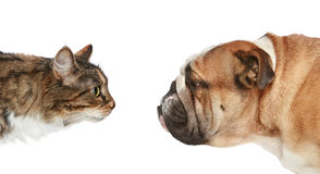 Cat and Dog on a white background. Dog and Cat looking at each other. Side view Royalty Free Stock Image