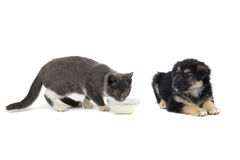Cat and dog Stock Photography