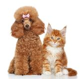 Cat and dog on white background Stock Photography