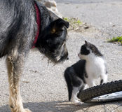 Cat and Dog will getting Friends Royalty Free Stock Images