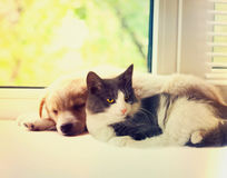 Cat and dog. At the window Stock Photos