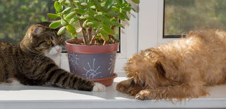 Cat and dog on the window Royalty Free Stock Photography