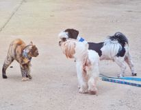 Cat and dogs. Dogs, 2 cats and 1 am greeting Stock Images