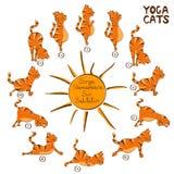 Cat doing yoga position of Surya Namaskara Royalty Free Stock Images