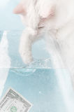 Cat and Dollar. A white cat trying to catch one dollar in aquarium with water Royalty Free Stock Photo