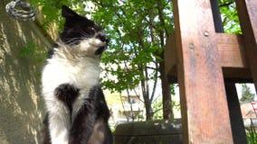 Cat Dolly schoss im Yard stock footage