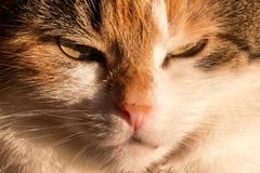 Cat, Domestic Cat, Lucky Cat, Mieze Stock Photo