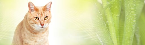 Cat. Domestic ginger pet cat over abstract green background Stock Photo