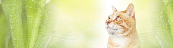 Cat. Domestic ginger pet cat over abstract green background Royalty Free Stock Photo