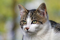 Cat. Domestic Cat outdoors basking in the sun Royalty Free Stock Photos