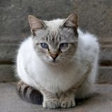 Cat - domestic cat sits ready to jump on a wall stock image