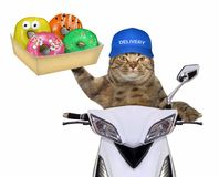 Cat with donuts on the scooter 2 stock photography