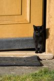 Cat and door Royalty Free Stock Image
