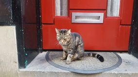 Cat on door step Royalty Free Stock Photography