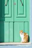 Cat doorstep lazy. A stray cat on a doorstep in front of a green door at a village in Malta Stock Images