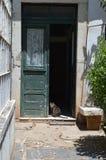 Cat in the doorway. Home, domestic, door, pet stock images