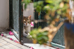A cat in the doorway. A cat lying in the doorway Royalty Free Stock Photography