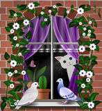 Cat. And doves on a window background Stock Photos
