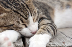 The cat dozing Royalty Free Stock Photos