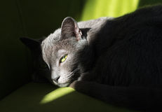 Cat dozing on the couch Stock Photos