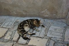 Cat dozing on a street stock images