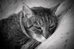 The cat is dozing Royalty Free Stock Photo