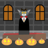 Cat Dracula rises from the coffin Royalty Free Stock Photos