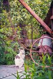 A cat on draw-well in the courtyard of the house. Close view royalty free stock photography