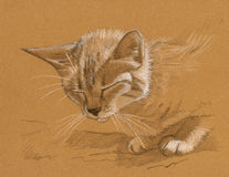 Cat drawing. A sketch drawing of a cat with closed eyes Stock Image