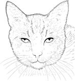 Cat drawing  Stock Image