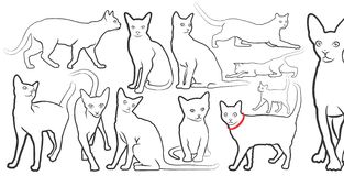Cat. Drawing of a domestic cat Stock Image