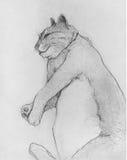 Cat Drawing grassa Fotografia Stock Libera da Diritti
