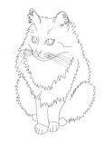 Cat drawing Royalty Free Stock Image