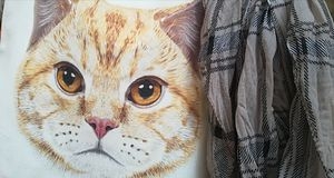 Cat drawing and scarf. Red cat and gray scarf royalty free stock images