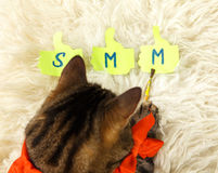 Cat drawing SMM by brush in his paw. At home royalty free stock photos