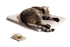Cat dream focus on cat. Sleeping cat with mousetrap on white Stock Photo
