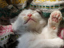 Cat dream royalty free stock images