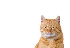 Cat Dreaming ilustración del vector