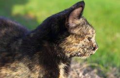 Cat Dreaming fotografía de archivo libre de regalías
