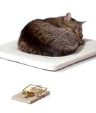 Cat dreaming with mousetrap. On white Royalty Free Stock Image
